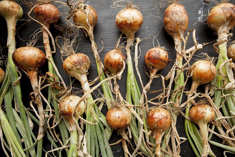 Weekly HarvestIMG_4080