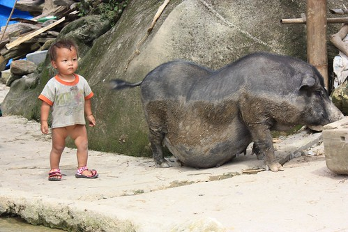 check out the size of this pig… pregnant or just that fat?