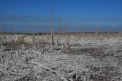 USA - Florida - Miami County - Northeast of Everglades