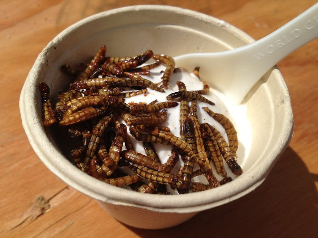 Toffee mealworms vanilla ice cream - Don Bugito