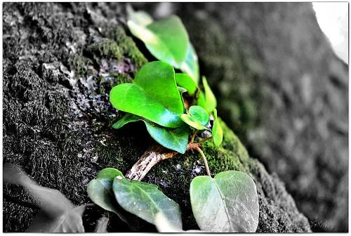 Bırakacağın eli hiç tutma, Tutacağın eli ise hiç bırakma. Sahte sevgilere gül olmaktansa, gerçek sevgilere diken ol Hz. Mevlana
