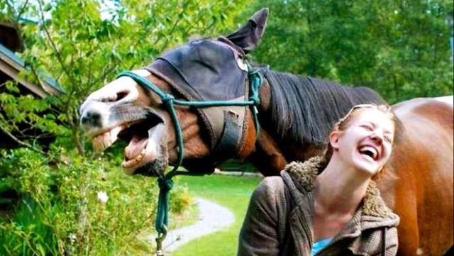 Kuda gembira!