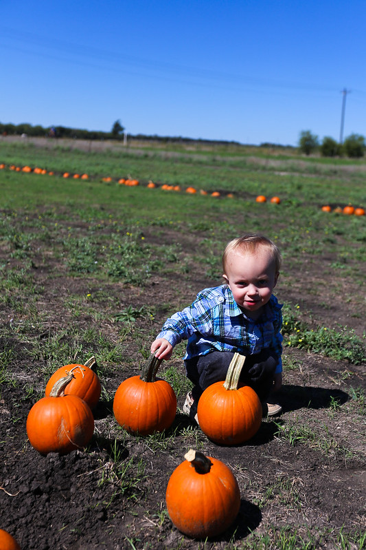 Big Orange Pumpkin Farm-13.jpg