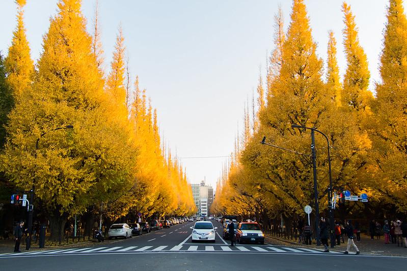 ginkgo avenue (aka icho namiki) - 13