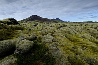 Moosfeld in der Nähe von Hellisheiðarvirkjun | Roland Krinner