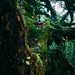 In the jungle by Dunez Photography & Design