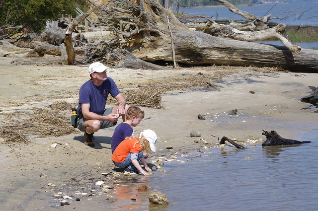 Dad watches as children hunt for fossils and shells at York River State Park
