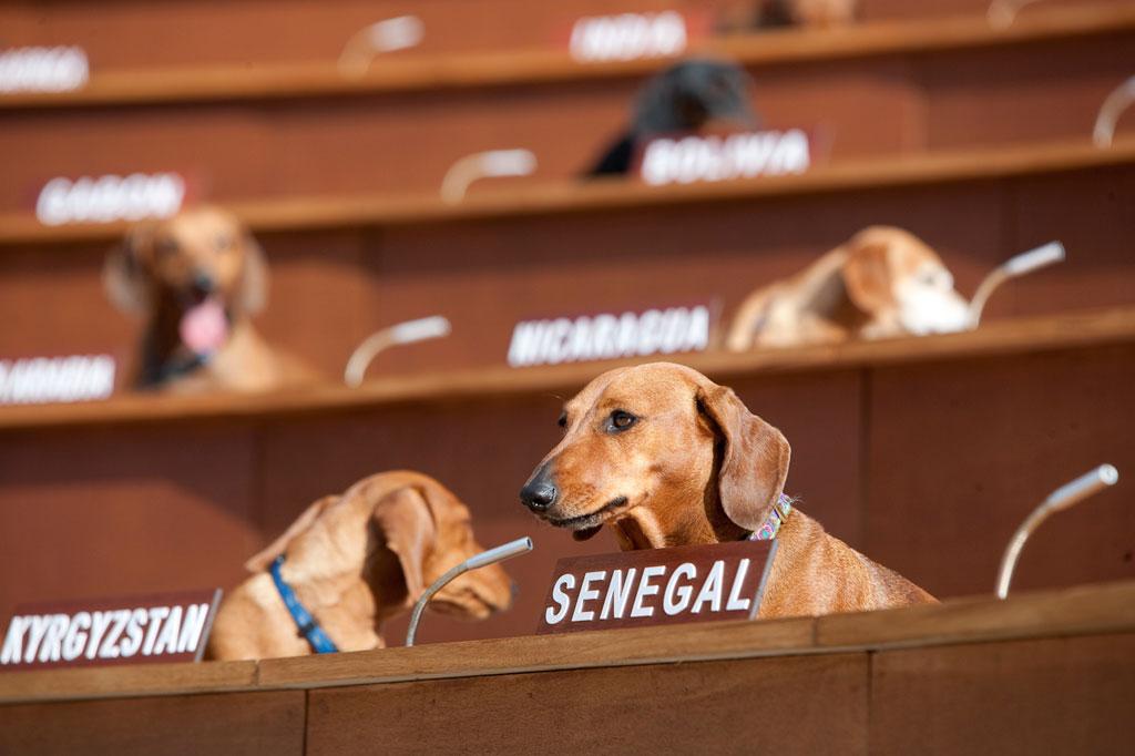 dachshund-UN_Jorge-de-Araujo_0621