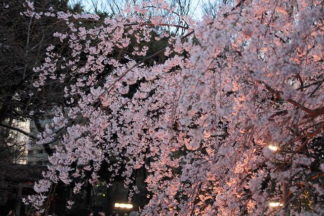 Rikugien Garden(六義園)