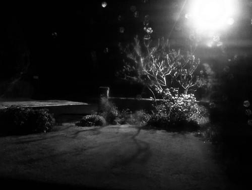 1000/810: 09 May 2012: Late Night Garden by nmonckton