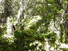 Visite de Sapara Altagna : ruines d'habitation à deux pièces