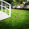 Bunny @ the Commander's Mansion, Watertown