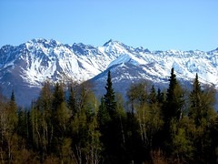 Mountain Palmer 2