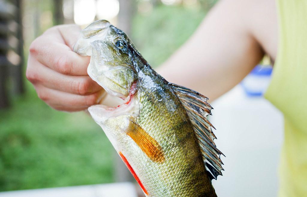 Fishing | Suonenjoki
