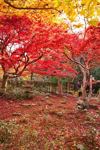 【写真】2012 紅葉 : 厭離庵/2020-10-15/IMGP7836