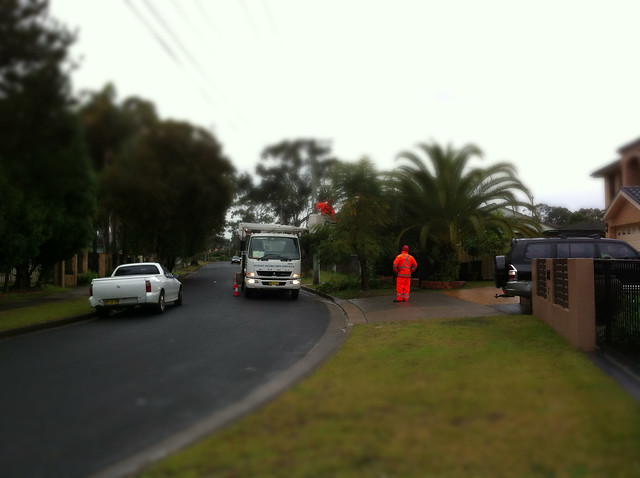 Tree Services in the Rain