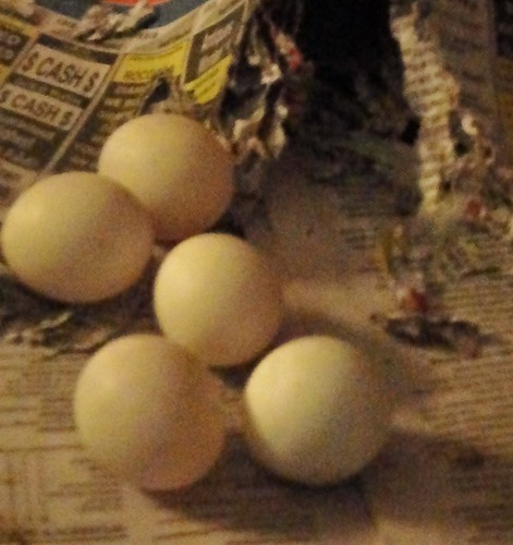 5 big ol eggs!