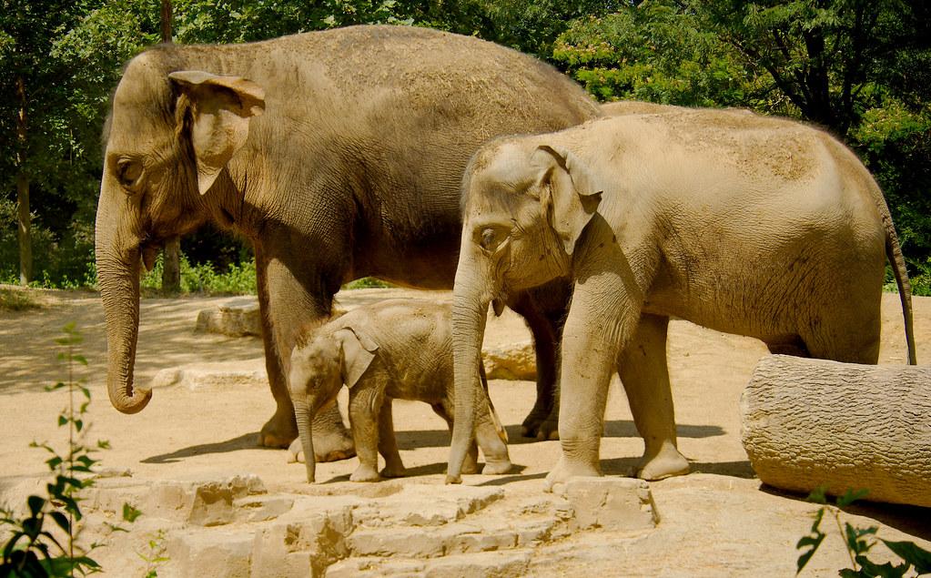 Elephant_109