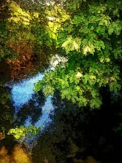 Chestnut river