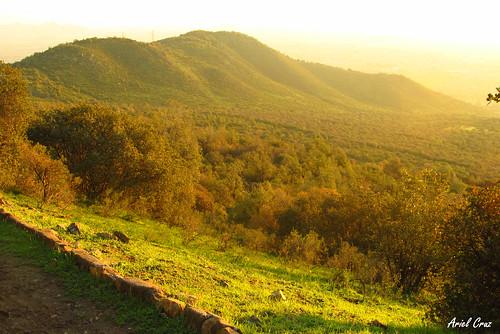 Bosque El Panul | El Panul Forest