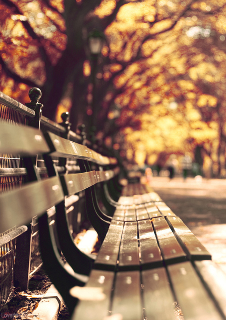 32416-Autumn-Bench