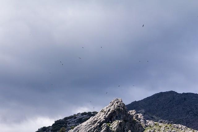 Many birds of prey above a cross