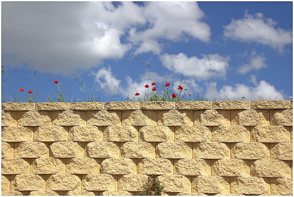 bardas, bordes, taludes, paredes y desmontes en primavera