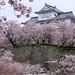 孤獨在守望 ~ Castle  surrounded by sakura cherry blossoms @ Tsuyama , Okayama 津山城城跡  ~