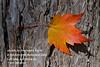 Autumn Leaf Haiku