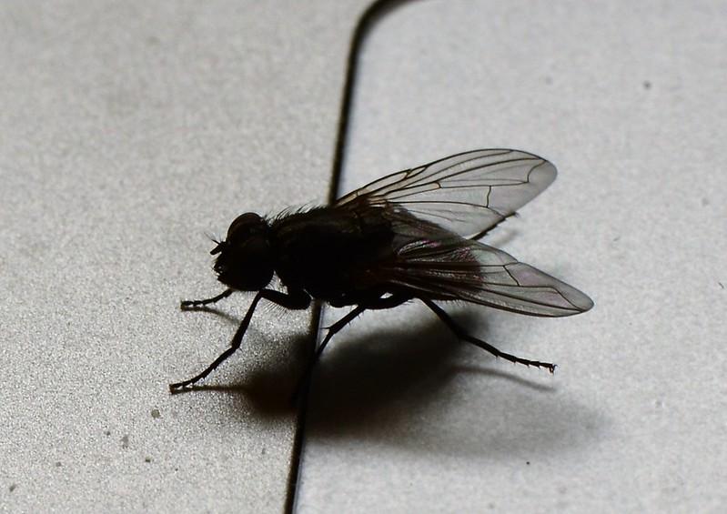 Fly 16.10 (2)