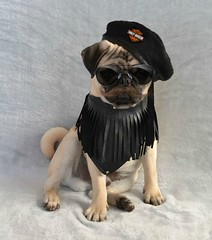 Boo Lefou 'Pugs of Anarchy' For Movember