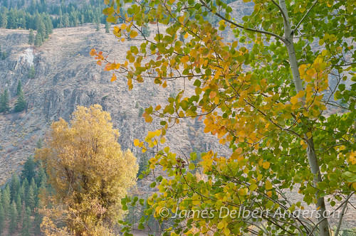 Methow color