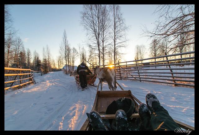 Excursiones Laponia finlandesa invierno - Trineo de renos