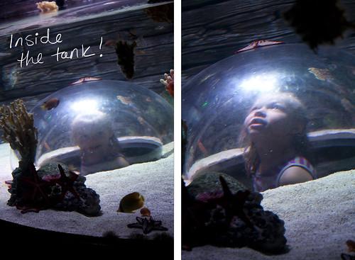 Sea Life In the Tank Blog