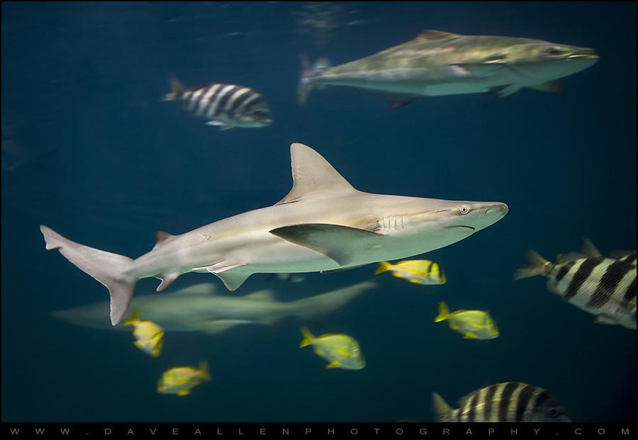 Elevation of nags head nc usa maplogs for Shark fishing nc