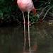 Flamingos rosa - Foto: Rê Sarmento