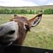 Donkey_0486.jpg