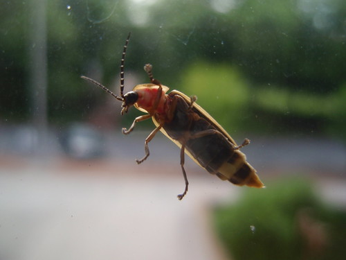 bug on the window