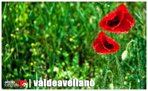 Valdeavellano | Primavera 2013 by alrojo09