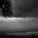 Stormy Morning by Nellie Vin