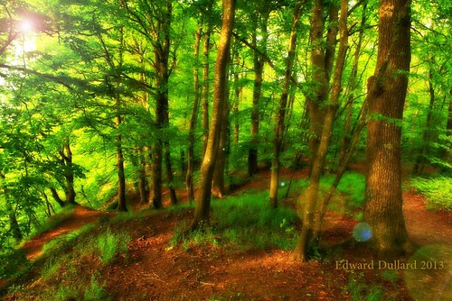 Ballyrafton wood.
