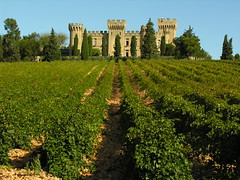 Chateau Neuf de Pape vineyard