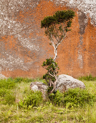 Malolotja Nature( tree and rock) Swaziland