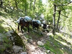 Sentier de Radule : au départ, la caravane de ravitaillement du refuge de Ciuttulu di I Mori