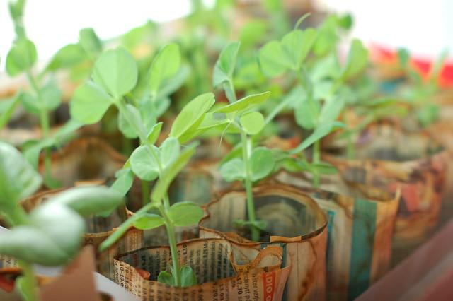 Growing things