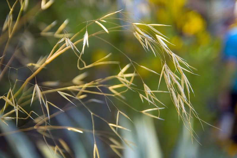 Matt Gil Sculpture stipa gigantea