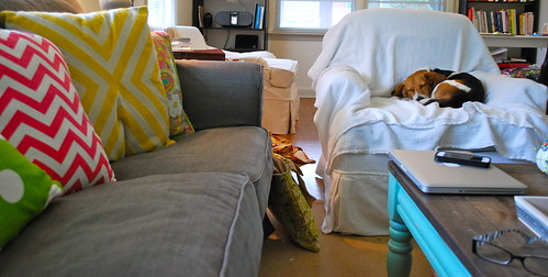 pets and white slipcovers