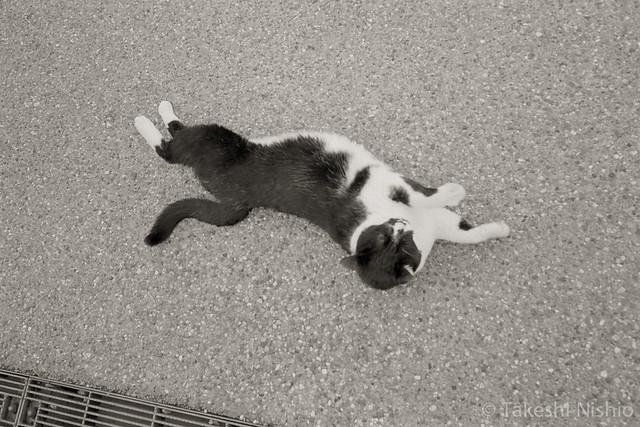 転がり猫 / Rolling