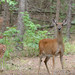Deer family friends  _7-15-13_066 by pmsswim