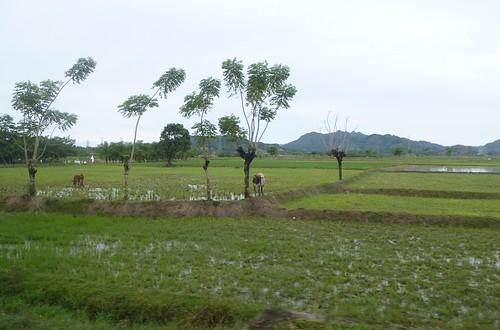 Sulawesi13-Sengkang-Pare Pare (47)
